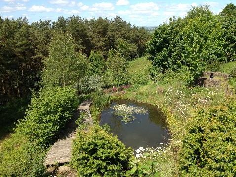 Pond at Blaengawney Farm holiday house